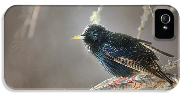 Starlings iPhone 5s Case - Catch The Morning Light by Susan Capuano