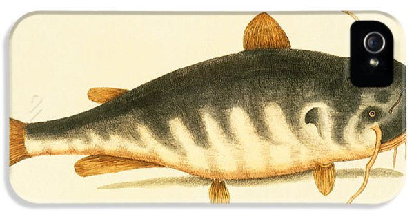 Catfish IPhone 5s Case by Mark Catesby