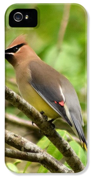 Cedar Wax Wing 1 IPhone 5s Case