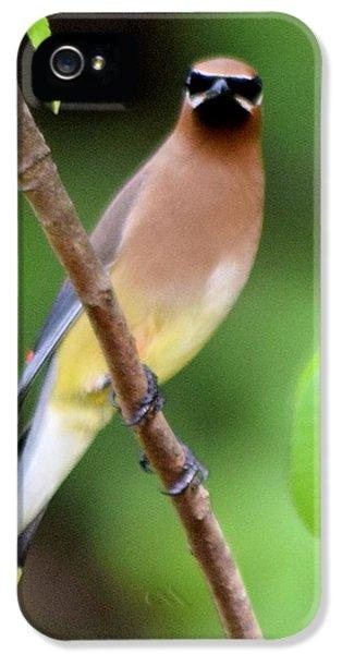 Cedar Wax Wing 2 IPhone 5s Case by Sheri McLeroy