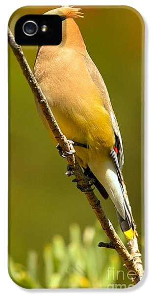 Cedar Waxwing IPhone 5s Case