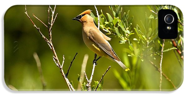 Cedar Waxwing At Glacier IPhone 5s Case by Adam Jewell