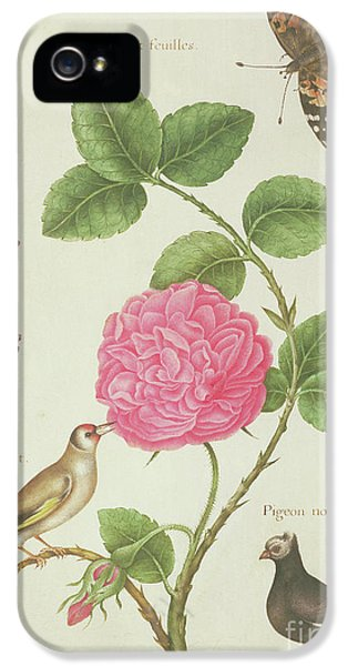 Centifolia Rose, Lavender, Tortoiseshell Butterfly, Goldfinch And Crested Pigeon IPhone 5s Case by Nicolas Robert