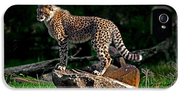 Cheetah Cub Finds Her Pride Rock IPhone 5s Case by Miroslava Jurcik