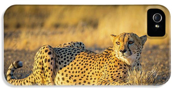 Cheetah Portrait IPhone 5s Case by Inge Johnsson