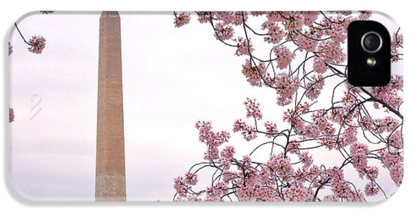 Cherry Washington IPhone 5s Case by Olivier Le Queinec