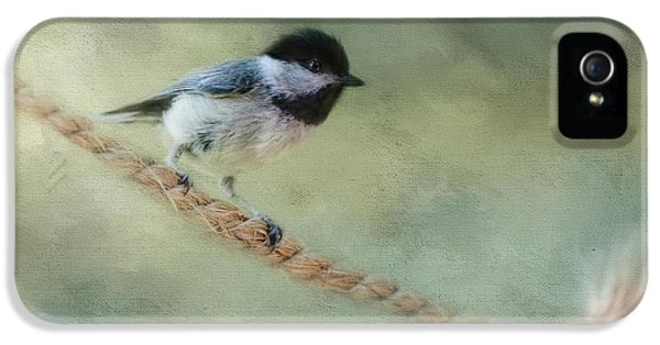 Chickadee At The Shore IPhone 5s Case by Jai Johnson