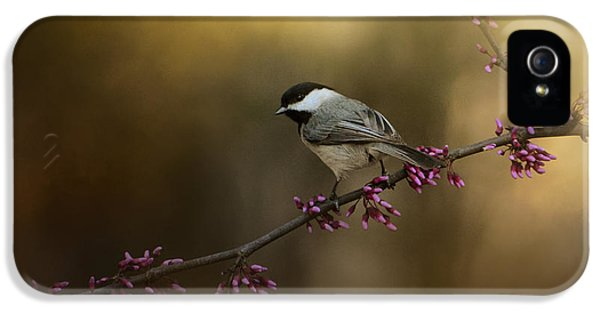Chickadee In The Golden Light IPhone 5s Case by Jai Johnson