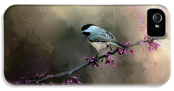 Chickadee In The Light IPhone 5s Case by Jai Johnson