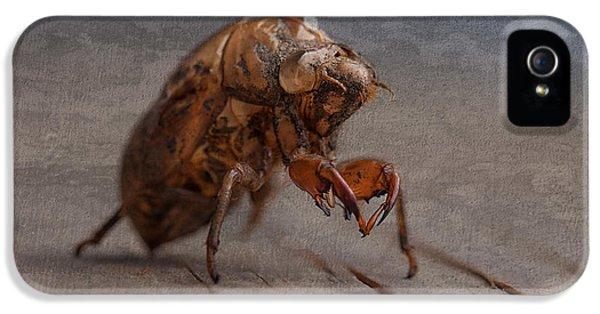 Cicada Shell IPhone 5s Case