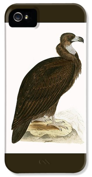 Cinereous Vulture IPhone 5s Case by English School