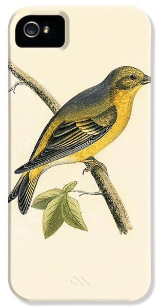 Citril Finch IPhone 5s Case