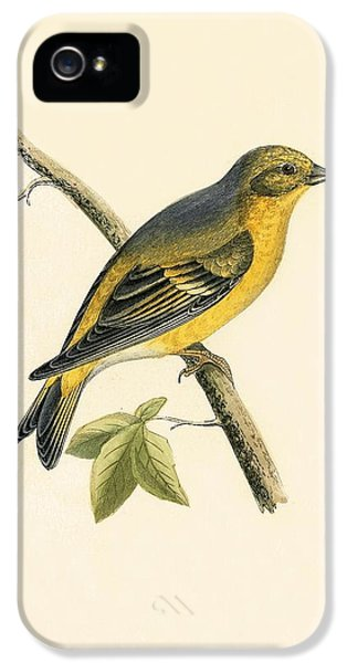 Citril Finch IPhone 5s Case by English School