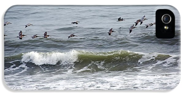 Classic Brown Pelicans IPhone 5s Case by Betsy Knapp