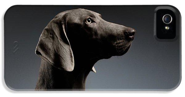 Dog iPhone 5s Case - Close-up Portrait Weimaraner Dog In Profile View On White Gradient by Sergey Taran
