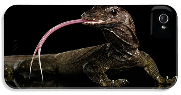 Close-up Varanus Rudicollis Isolated On Black Background IPhone 5s Case by Sergey Taran