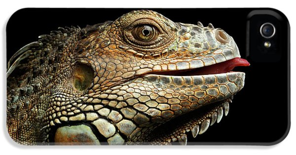 Close-upgreen Iguana Isolated On Black Background IPhone 5s Case by Sergey Taran