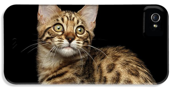 Closeup Bengal Kitty On Isolated Black Background IPhone 5s Case by Sergey Taran