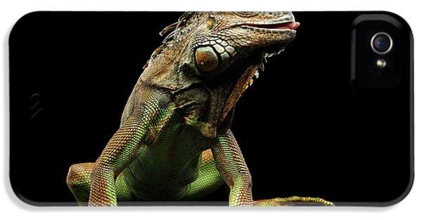 Closeup Green Iguana Isolated On Black Background IPhone 5s Case by Sergey Taran