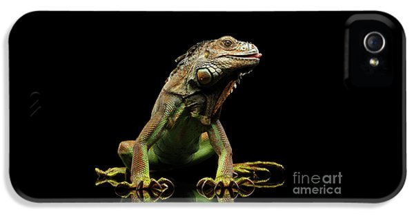 Closeup Green Iguana Isolated On Black Background IPhone 5s Case by Sergey Taran