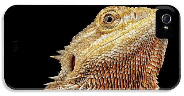 Closeup Head Of Bearded Dragon Llizard, Agama, Isolated Black Background IPhone 5s Case by Sergey Taran