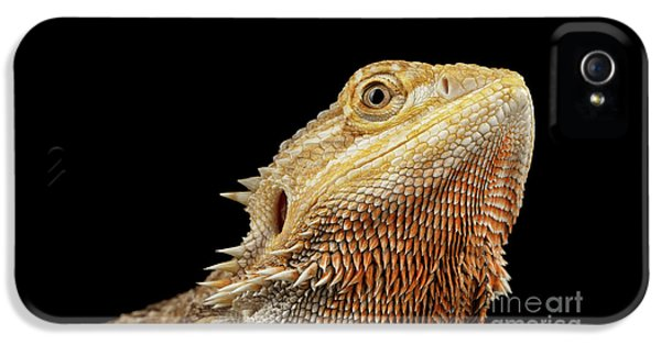 Closeup Head Of Bearded Dragon Llizard, Agama, Isolated Black Background IPhone 5s Case by Sergey Taran