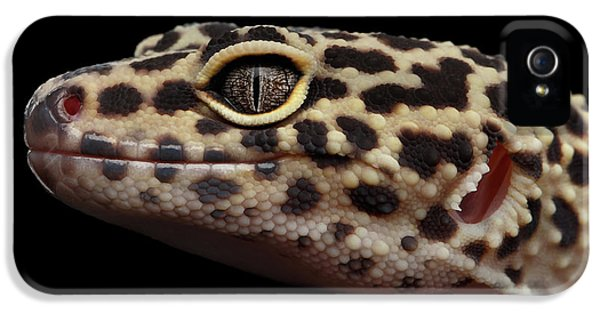Closeup Head Of Leopard Gecko Eublepharis Macularius Isolated On Black Background IPhone 5s Case by Sergey Taran
