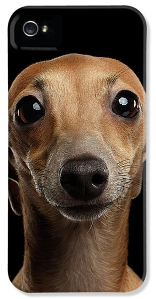 Closeup Portrait Italian Greyhound Dog Looking In Camera Isolated Black IPhone 5s Case by Sergey Taran