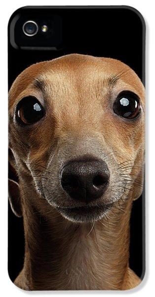 Dog iPhone 5s Case - Closeup Portrait Italian Greyhound Dog Looking In Camera Isolated Black by Sergey Taran