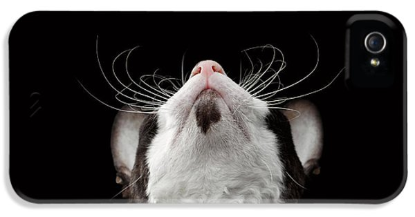 Cat iPhone 5s Case - Closeup Portrait Of Cornish Rex Looking Up Isolated On Black  by Sergey Taran