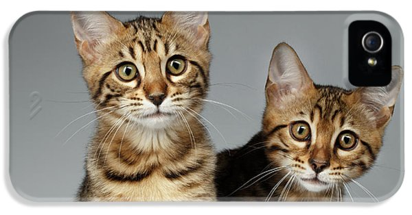 Closeup Portrait Of Two Bengal Kitten On White Background IPhone 5s Case by Sergey Taran