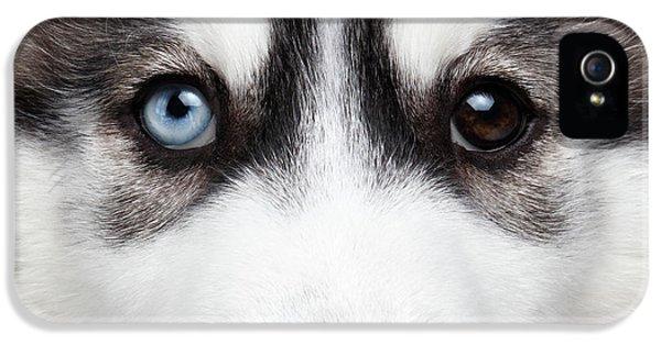 Dog iPhone 5s Case - Closeup Siberian Husky Puppy Different Eyes by Sergey Taran