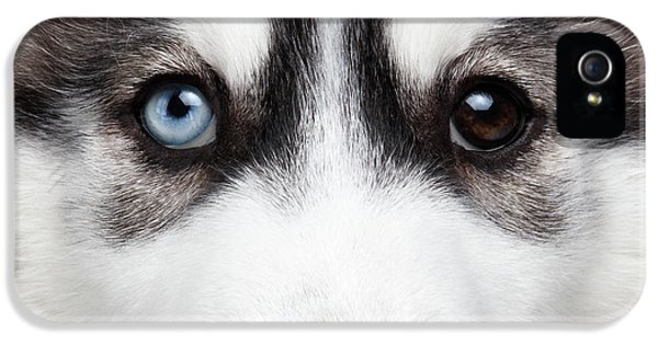 Closeup Siberian Husky Puppy Different Eyes IPhone 5s Case by Sergey Taran