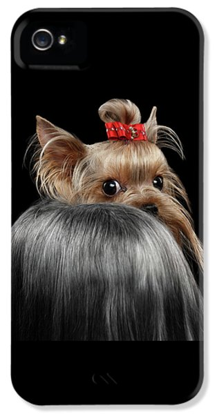 Dog iPhone 5s Case -  Closeup Yorkshire Terrier Dog, Long Groomed Hair Pity Looking Back by Sergey Taran