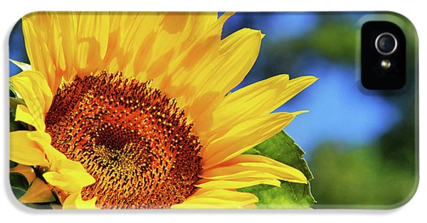 Color Me Happy Sunflower IPhone 5s Case