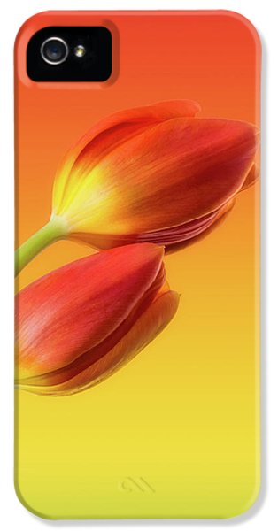 Tulip iPhone 5s Case - Colorful Tulips by Wim Lanclus