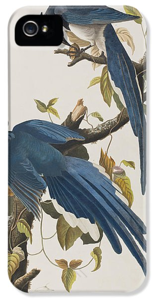 Columbia Jay IPhone 5s Case by John James Audubon