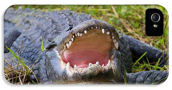 Alligator iPhone 5s Case - Come A Bit Closer by Mike Dawson