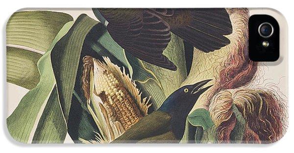 Common Crow IPhone 5s Case by John James Audubon