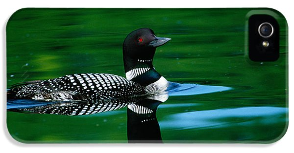 Loon iPhone 5s Case - Common Loon In Water, Michigan, Usa by Panoramic Images