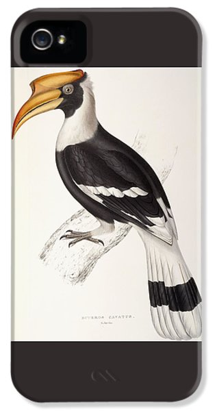 Hornbill iPhone 5s Case - Concave Hornbill by John Gould