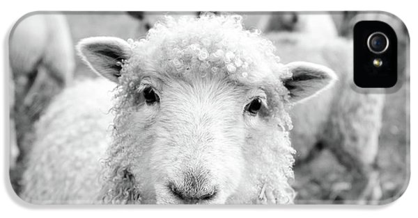 Sheep iPhone 5s Case - Contentment by Pixabay