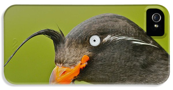 Crested Auklet IPhone 5s Case by Desmond Dugan/FLPA