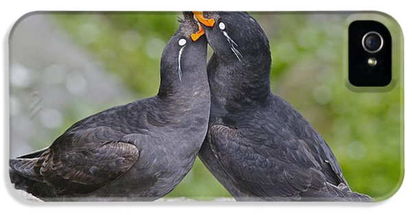 Crested Auklet Pair IPhone 5s Case by Desmond Dugan/FLPA
