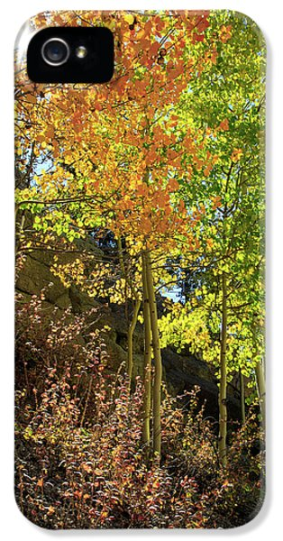 IPhone 5s Case featuring the photograph Crisp by David Chandler