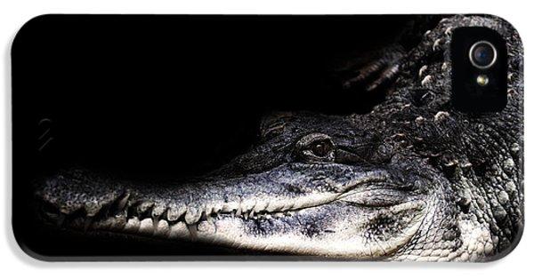 Crocodile iPhone 5s Case - Crocodile by Martin Newman