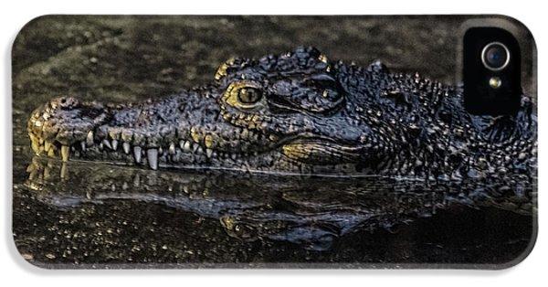 Crocodile iPhone 5s Case - Crocodile Reflections by Martin Newman