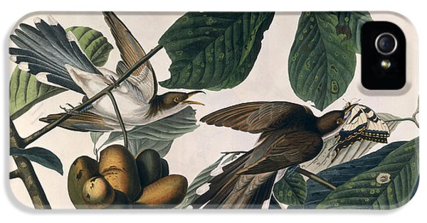 Cuckoo IPhone 5s Case by John James Audubon