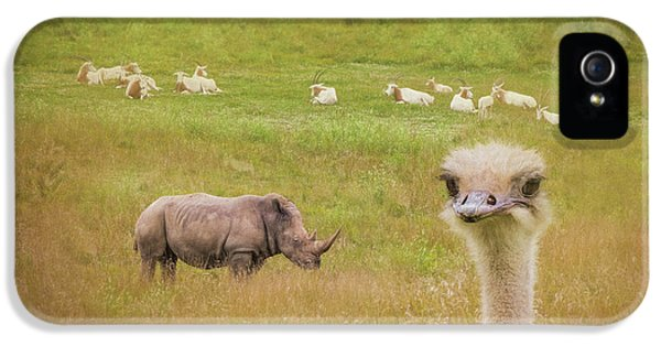 Ostrich iPhone 5s Case - Curious Ostrich And White Rhino by Tom Mc Nemar