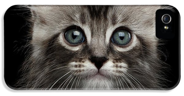 Cat iPhone 5s Case - Cute American Curl Kitten With Twisted Ears Isolated Black Background by Sergey Taran